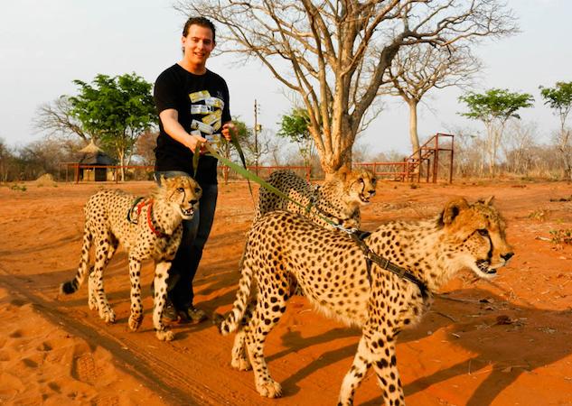 Zambia-cheetahs.jpg