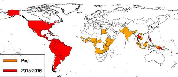Zika 2.png