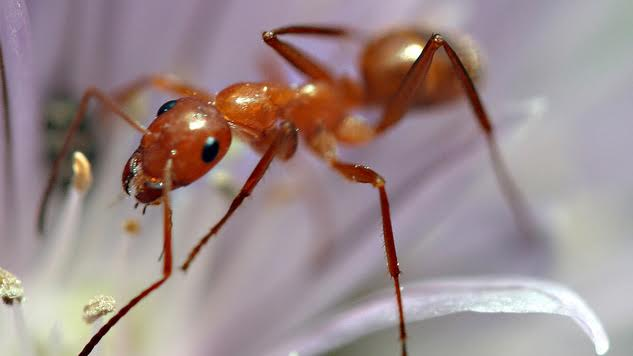 Even Ants Have a Work-Life Balance. Shouldn't We?