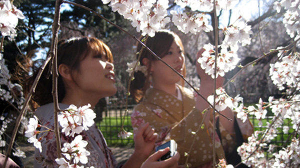The-Tsunami-and-the-Cherry-Blossom.0.jpg