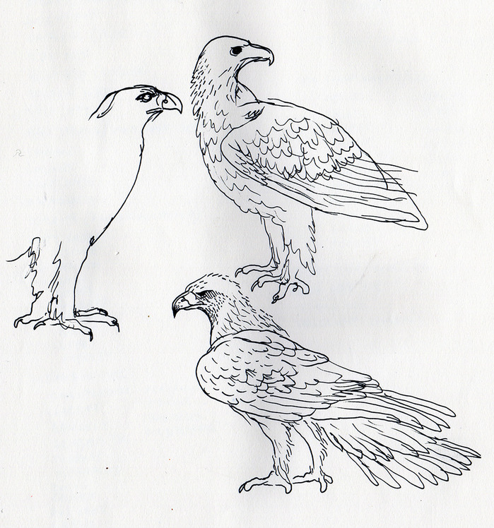 sketch13eagle.jpg