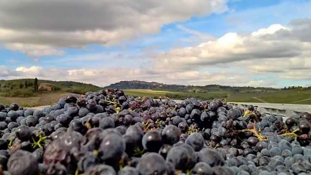 Eco Wine-Star Spotlight: Avignonesi