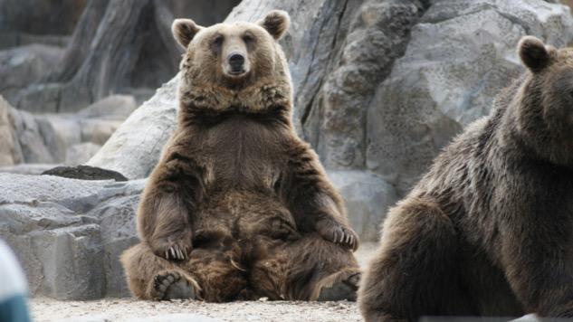 <i>de</i>Generation X: The Bears Bite Back in Romania