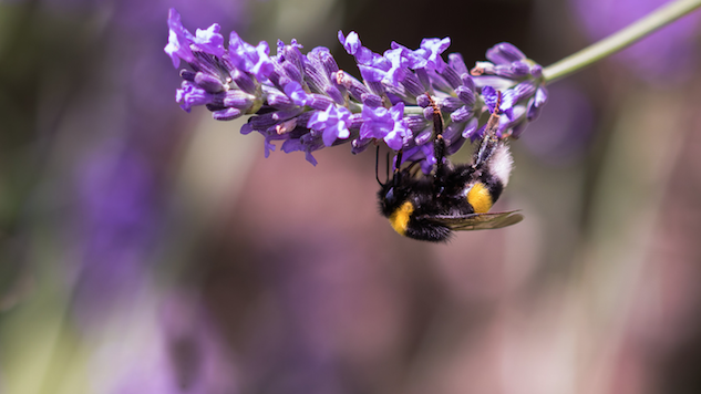 How to Bring Bees and Other Beneficial Insects into Your Garden