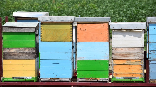 <i>Weird Science</i>: Honey Bee Extinction Could Mean Our Economic Downfall