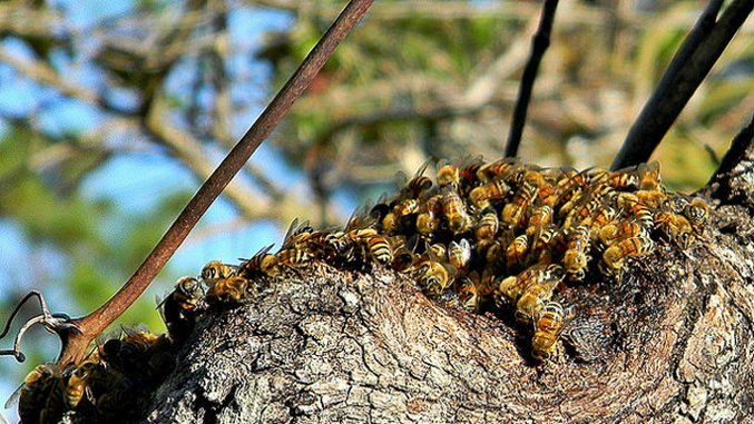 All Abuzz About Bees