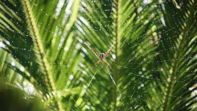 A Spider vs. Gecko Battle Showed Me the True Heart of Belize