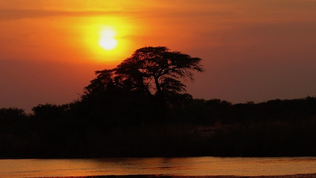 How to Drink Through a Safari in Botswana