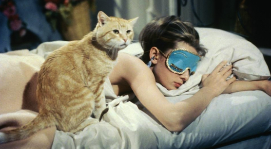 Image result for holly golightly cat
