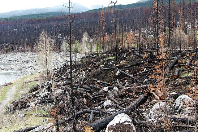 burnedforest.png
