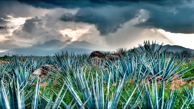How Tequila Is Made: In Pictures