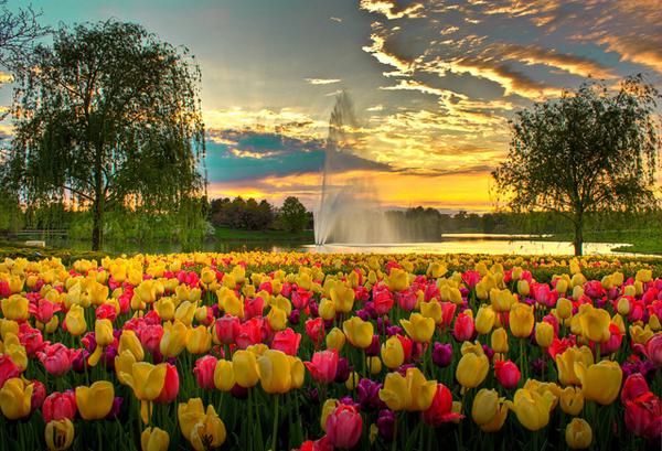 chicago-botanic-garden-sandeep-pawar.jpg