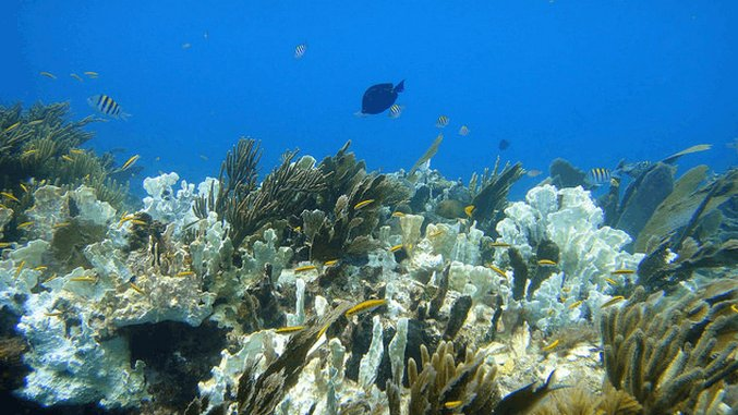 Damage from Bleaching Now Affects Nearly All Coral Reefs