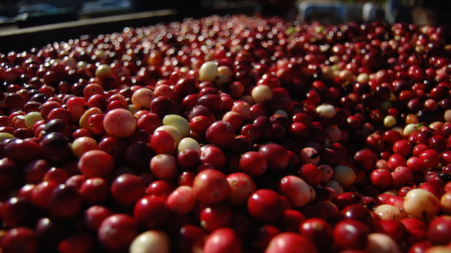 A Day in the Life of the Cranberry Harvest