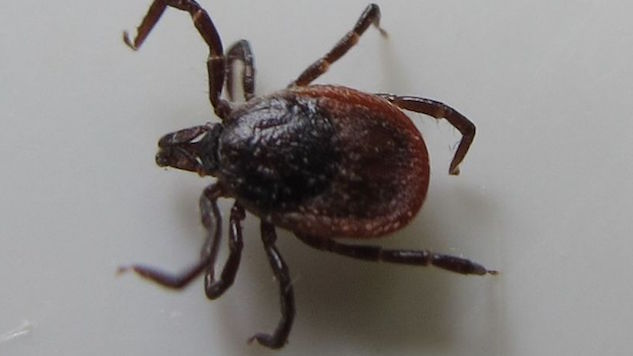 Lyme Disease Has Been Discovered in 9 National Parks