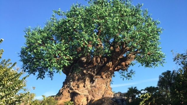 The 10 Best Attractions at Disney's Animal Kingdom
