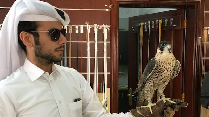 Qatar's Fascinating Fixation With Falcons