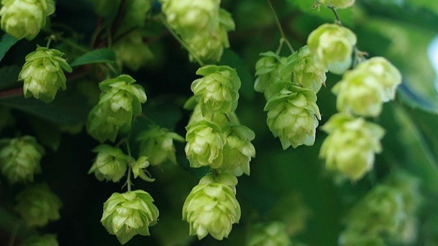5 Fresh Hop Beers You Have to Drink Right Now