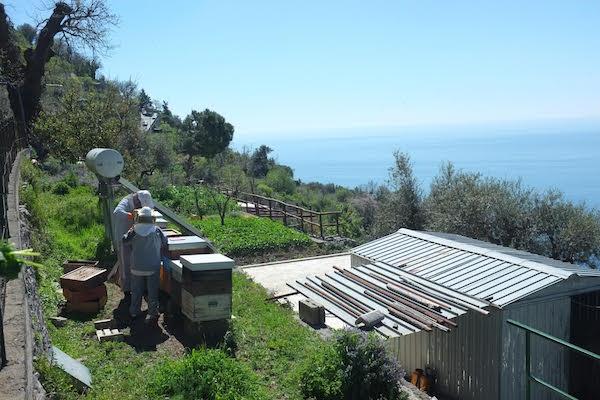 foraging bees.jpg