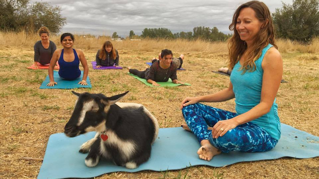 Goat Yoga: A Happy Distraction