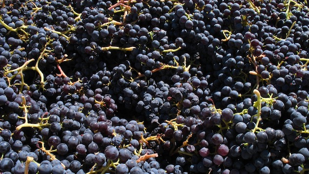 52 Wines in 52 Weeks: Grenache is Liquid Summer