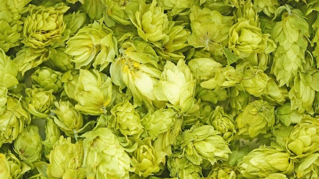A Bunch of Fresh Hop Beers to Drink Right Now