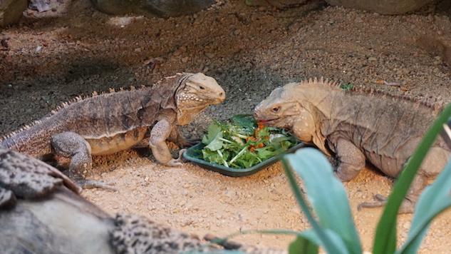 This British Wildlife Park Treats Endangered Animals to Restaurant-Worthy Dining