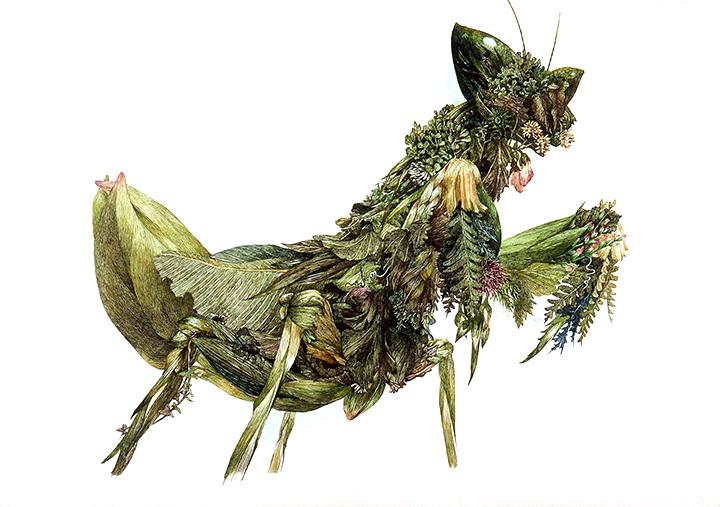 ikeda-grass-mantis.jpg