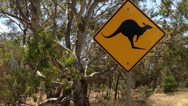Wild-Caught Kangaroo Meat: Tasty, Healthy, Quasi-Gourmet