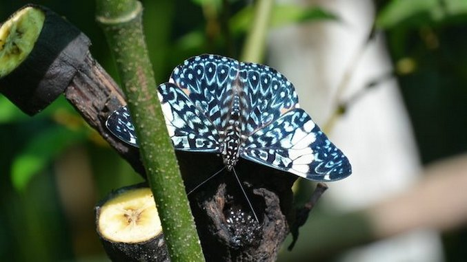 Inside an Amazonian Butterfly Farm and Animal Rescue