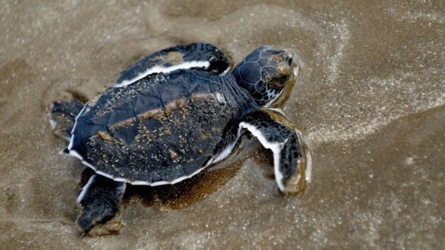 Travelers Can Now Help Save the Sea Turtles