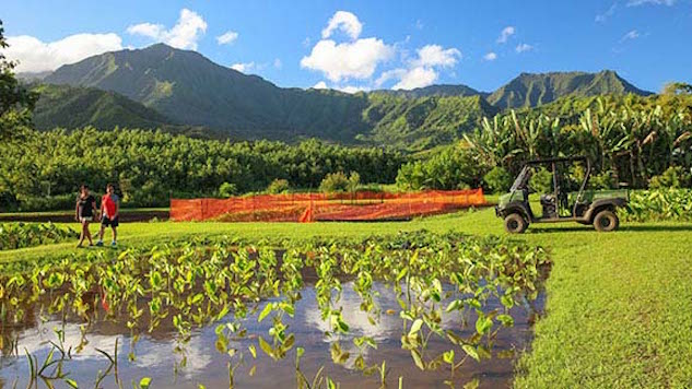 Two Hawaiian Farm-to-Table Tours to Book