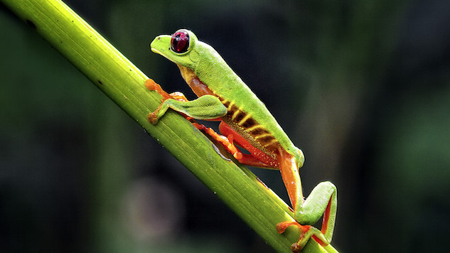 Frogs Benefit From Dinosaur Extinction