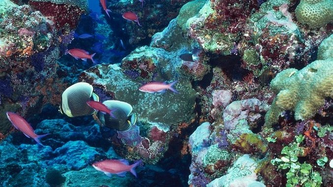 <i>Sustainability Report</i>: High-Tech Coral Reef Monitoring