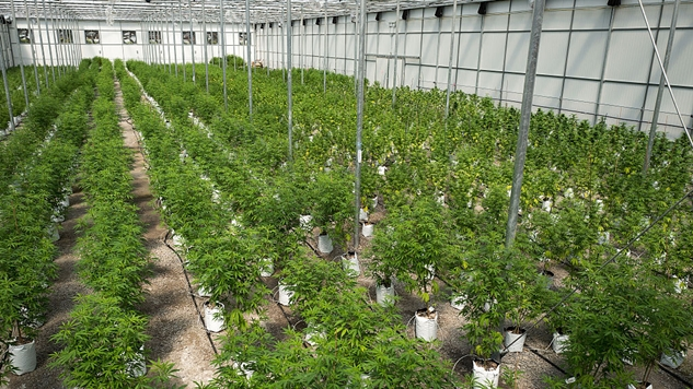 Colorado Pot: State House Picks Fight With Feds