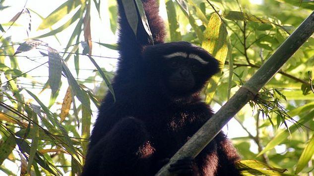 New Primate Species Named For Luke Skywalker