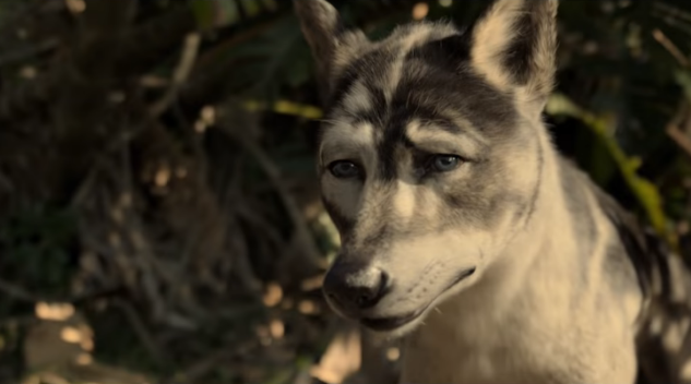 The New Trailer for Netflix's <i>Mowgli</i> Contains Much More Unsettling CGI
