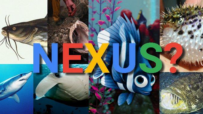 The History of Nexus Codenames: Google Loves Fish