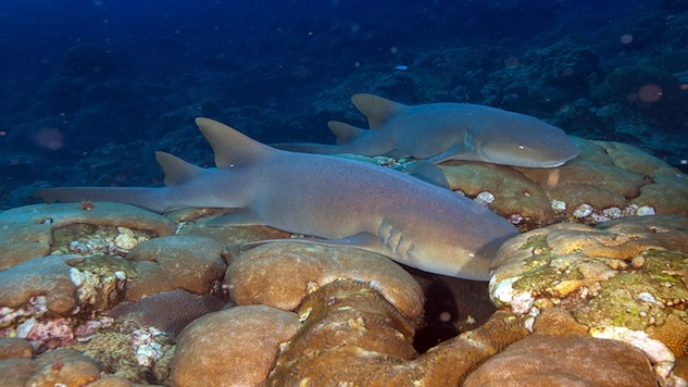nurse-sharks-541919_640.jpg