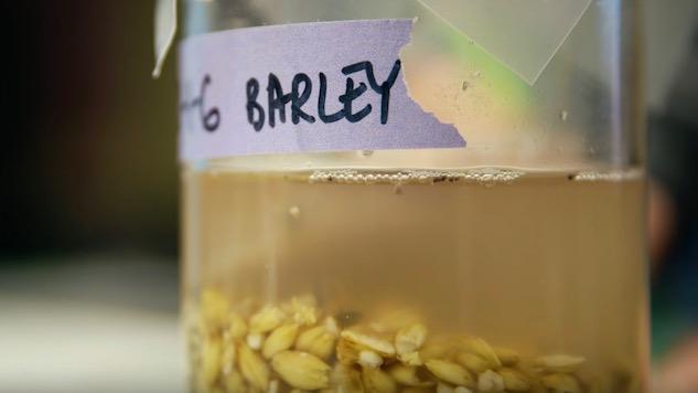 University Students Recreate 5,000-Year-Old Beer