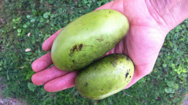 5 Ways to Get Your Pawpaws on This Season