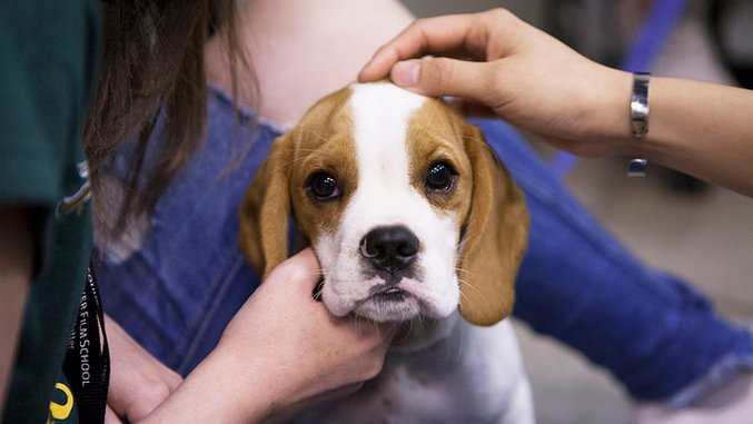 On the Mind: How Pets Help Our Brains