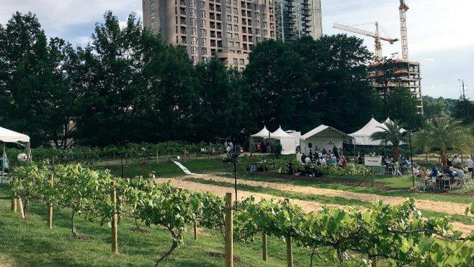 Atlanta Food & Wine Fest Hosts A Pop-Up Vineyard