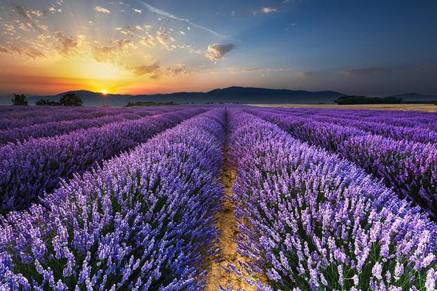 provence-lavendar-fields.jpg