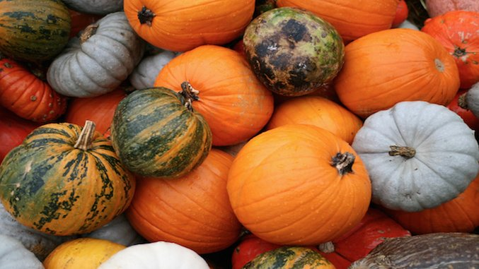 5 Savory Spices and Herbs to Pair with Pumpkin