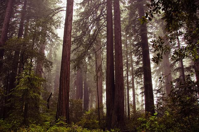 redwoods__beauty.jpg