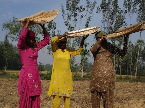 seed india.jpg