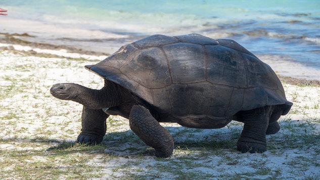 seychelles turtle.jpg