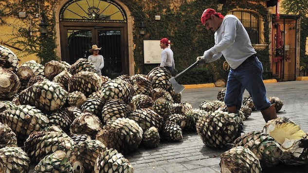 The Beginner's Guide to Craft Tequila
