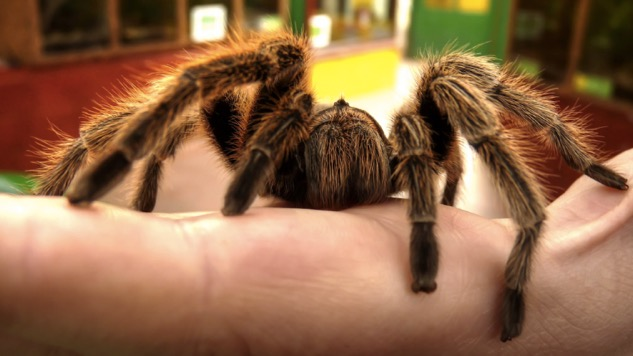 From Alabama to Colombia: A Tarantula Hair in the Eyeball